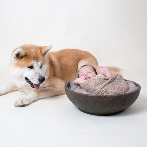 צילום ניובורן עם כלב גינגי