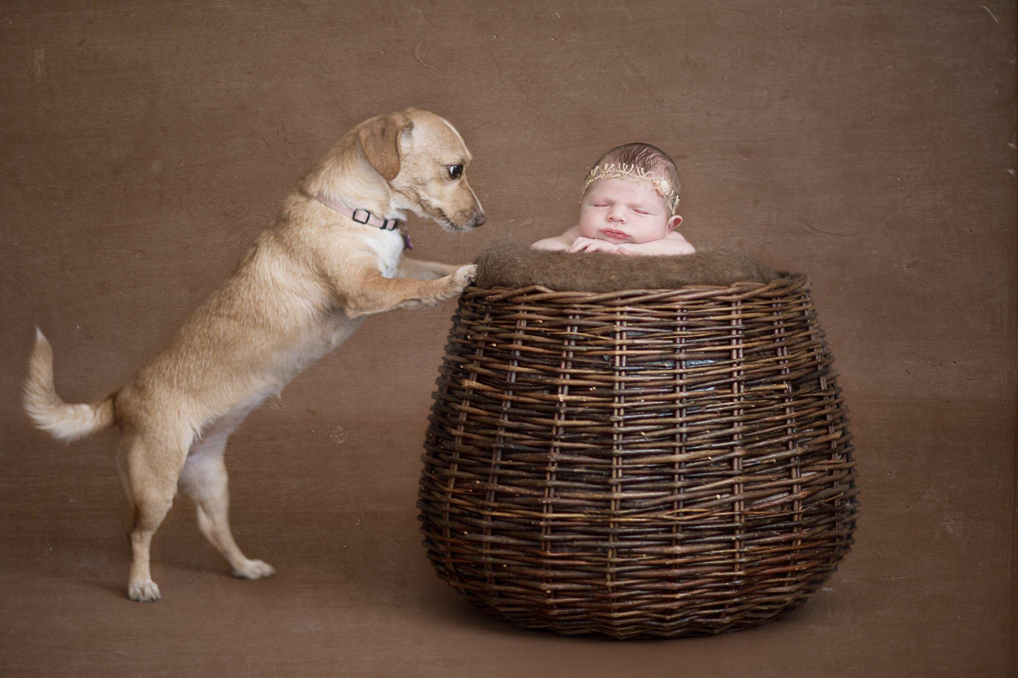 צילומי ניו בורן עם הכלב