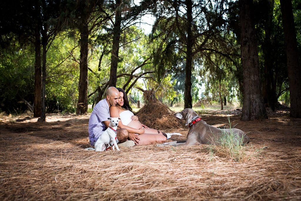 צילומי הריון עם הכלבים