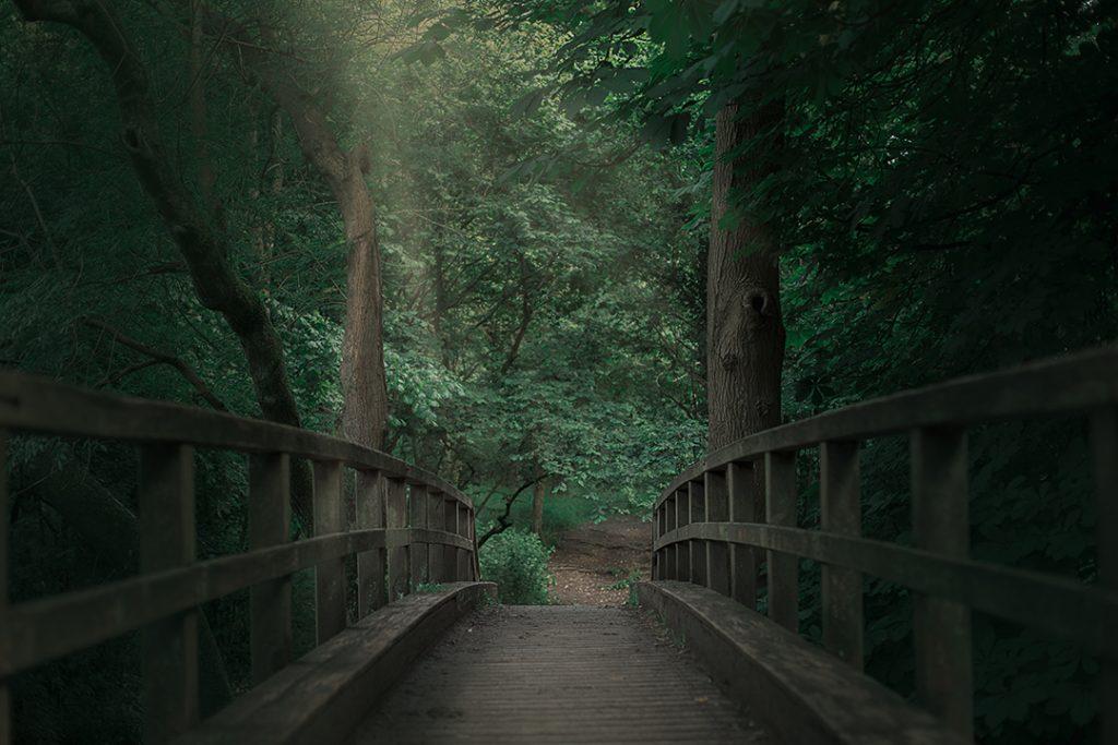 צילומי גשר ביער