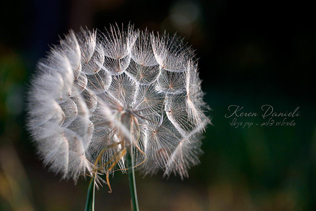 צילומי פרח יפה
